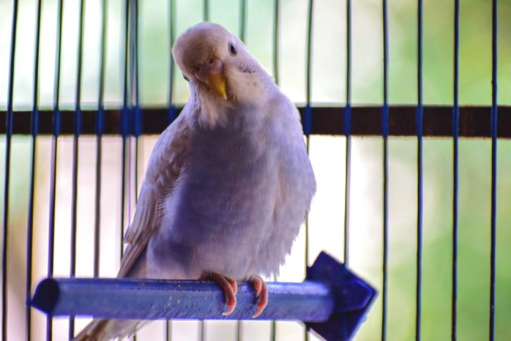 vogel kooienadvies